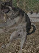 Jumpingdog