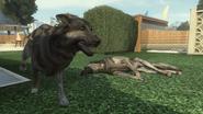 Dog8 BOII