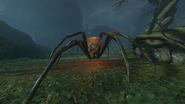 Spider Frontview ZNS BO3