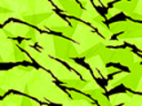 Neon Tiger Camouflage