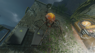 Spider on wall ZNS BO3