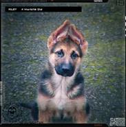 Райли щенок