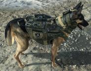 Guard Dog deployed CoDG