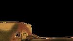 Panzerschreck first person CoD2