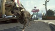 Dog4 BOII