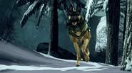 Guard Dog running Whiteout CoDG
