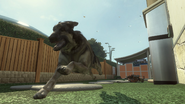 Dog3 BOII