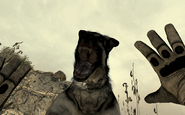 Dog attacking a player MW2