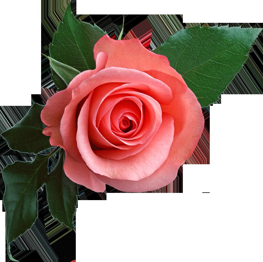 Blossom Burst Puzzle 2019 - Mga App sa Google Play
