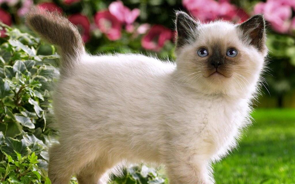Pets/Amanda's cat, Diana