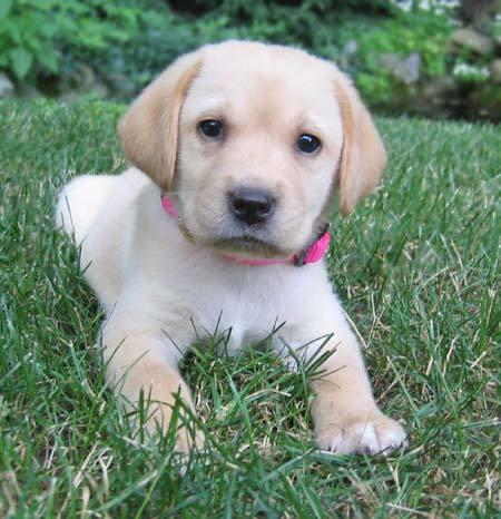 Pets/Luna's Dog
