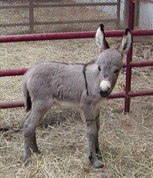 Pets/Shiloh's Donkey