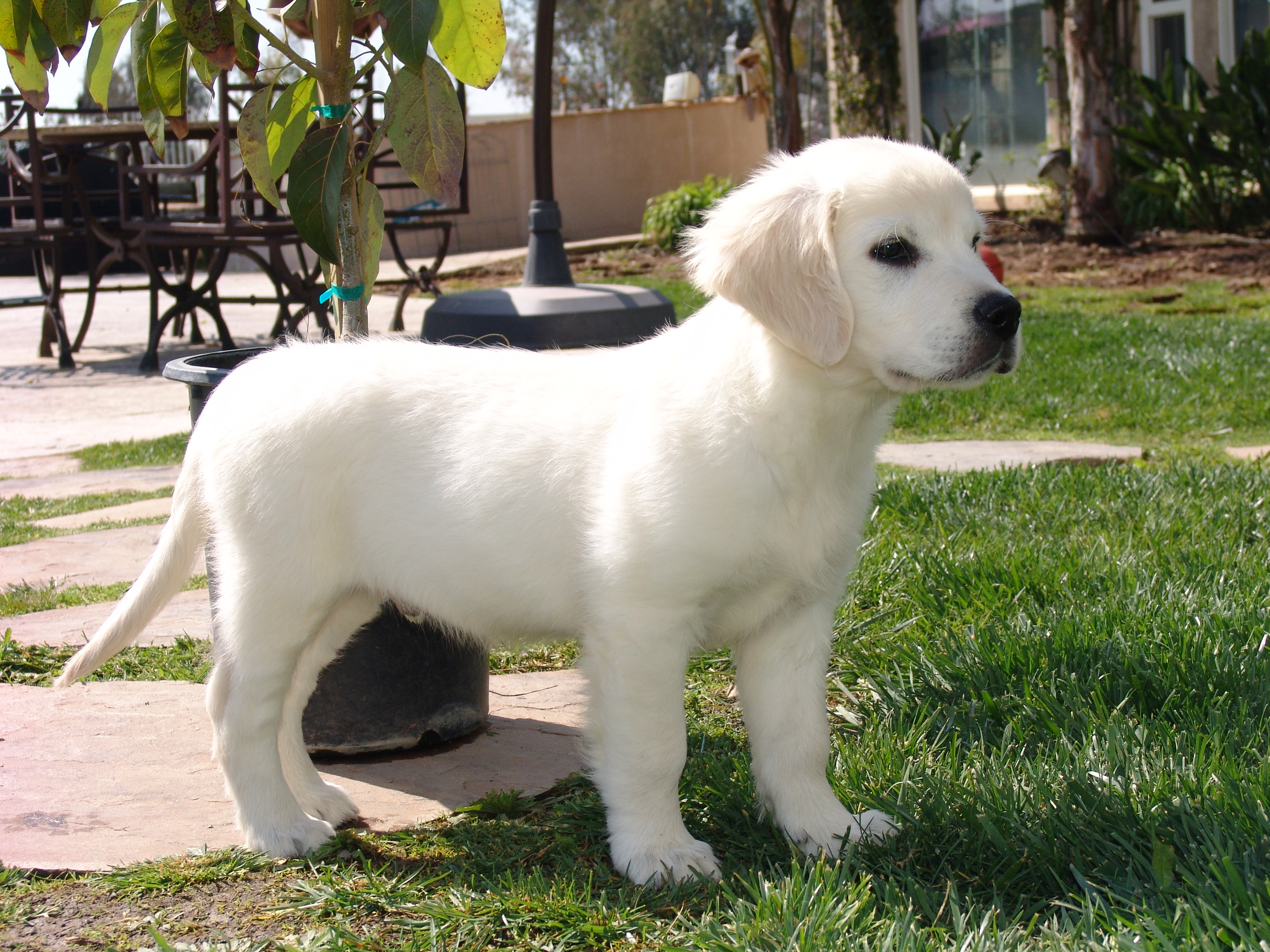 Pets/Darcy