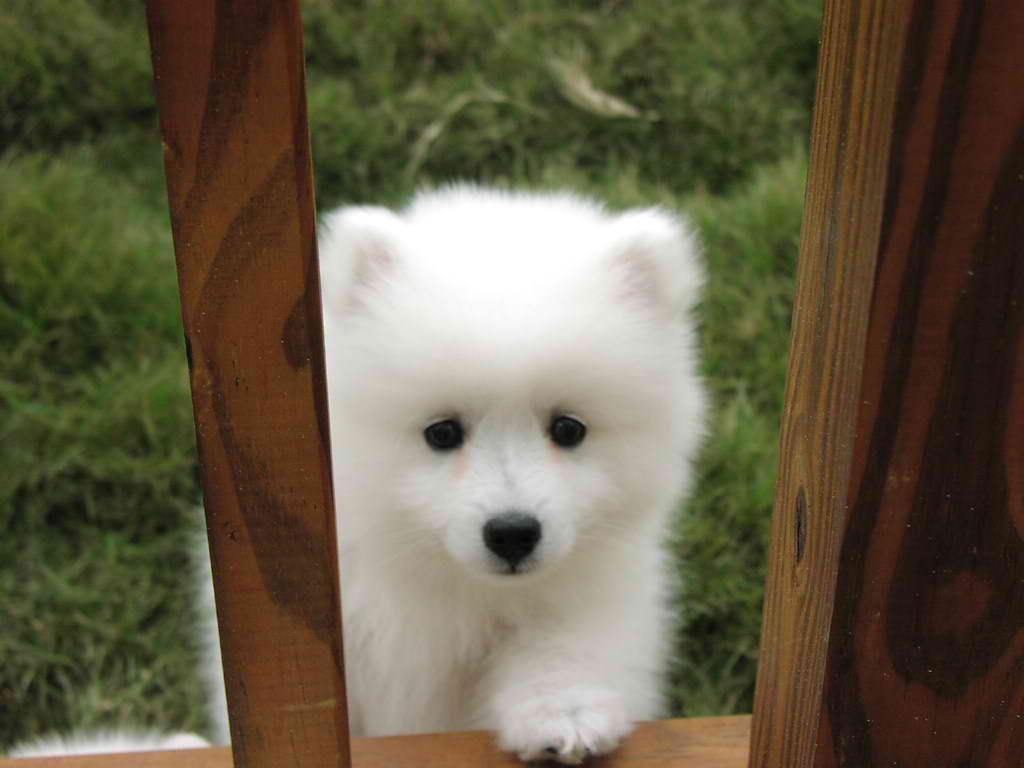 Anna Joy Smith's dog.jpg