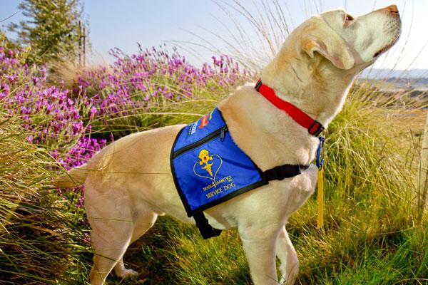 Armstrong-service-dog.jpg