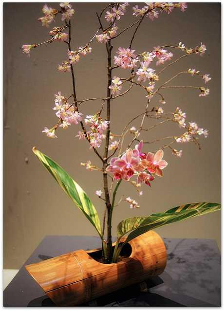IkebanaBradley.jpg