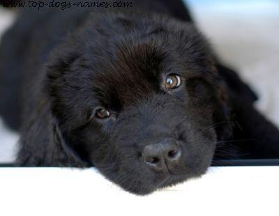 2-black-dog.jpg