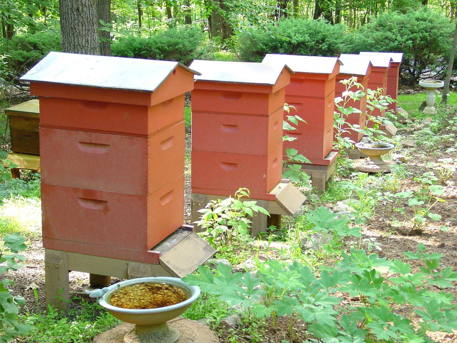 BeeHive Home 04.JPG