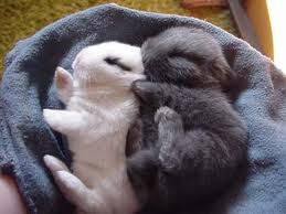 Pets/Lexi Mansin's Bunnies- Thumper and Dex