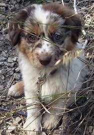 Pets/Trey's Dog