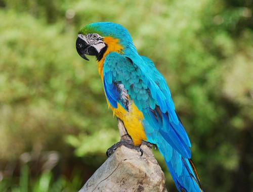 Pets/Naomi's Parrot