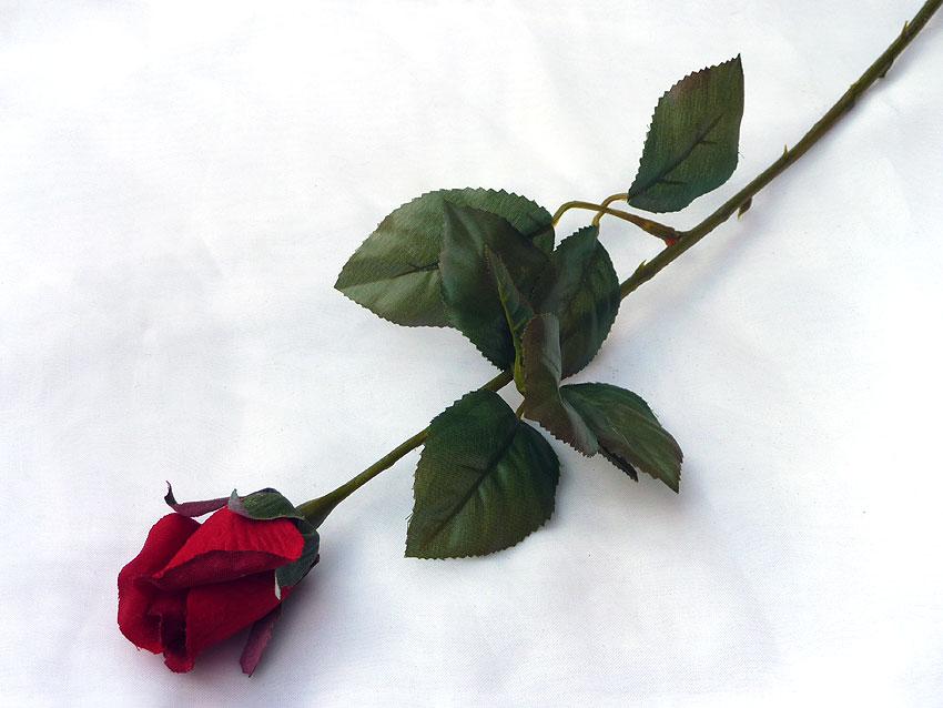 Luka rose.jpg