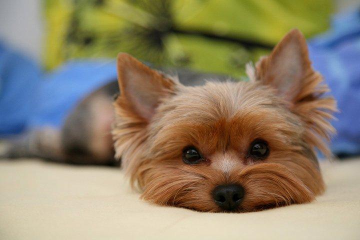 Glen's dog.jpg