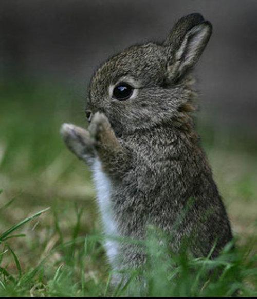 Pets/Matthew's Bunny