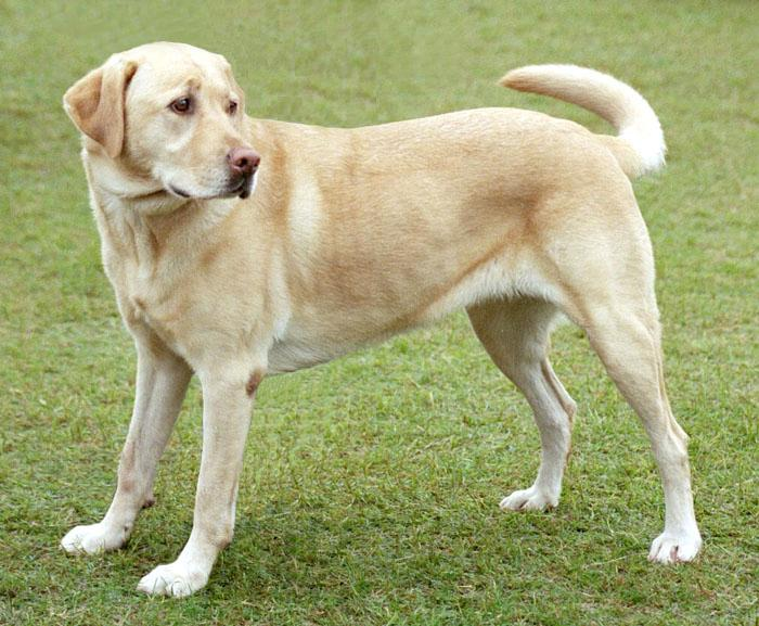 Pets/Kassiani's dog - Naerys