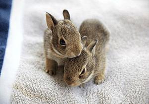 Baby-Bunnies-s.jpg