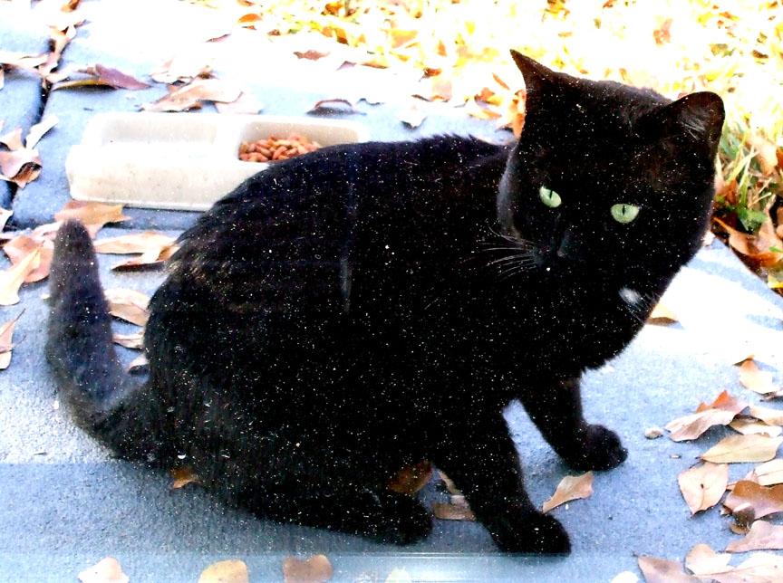 Blackcat-jaguarjulie.jpg