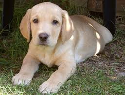 Pets/Courtney's Puppy