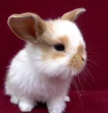 Bunny13.jpg