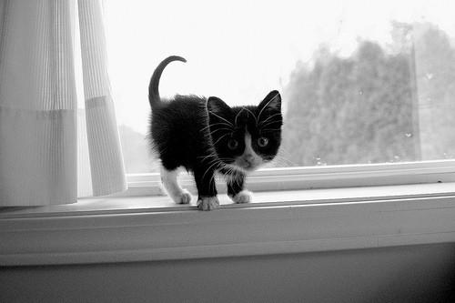 Pets/Totoro the Kitty