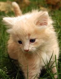 AnnaWise's Kitten.jpg