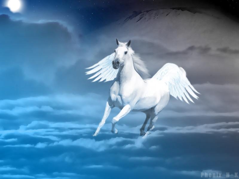 Pets/Rebbeca Hylton's Pegasus, Louie