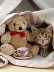 Fizzie's Kitten.jpg