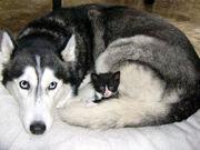 Kitten1456 03.jpg