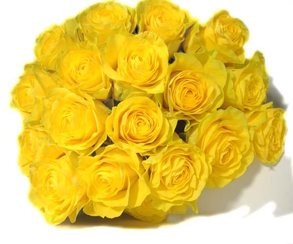 Yellow-roses.jpeg