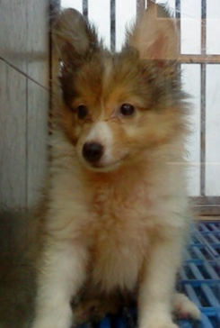 Pets/Karen's Dog