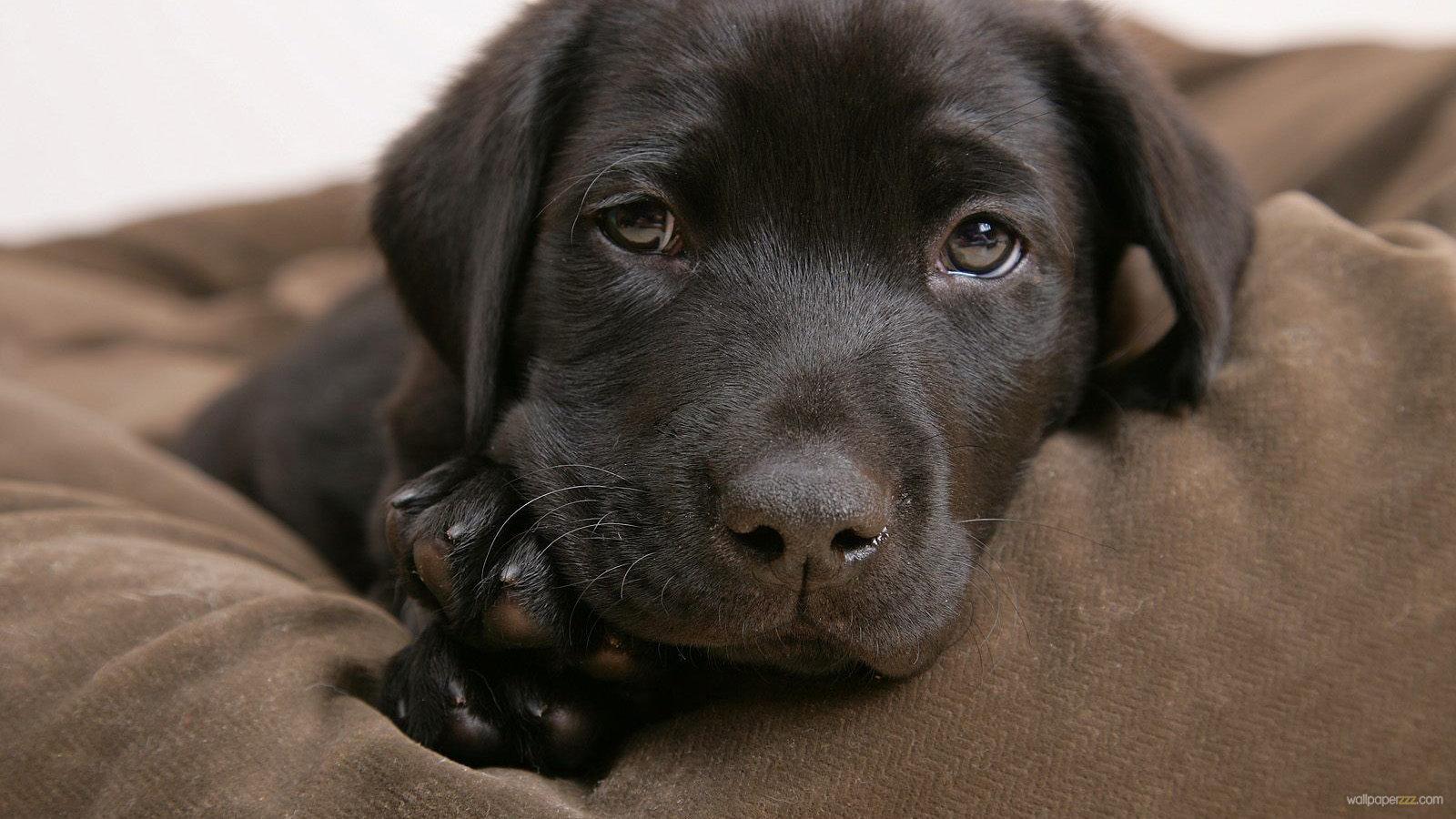 Leia's puppy.jpg