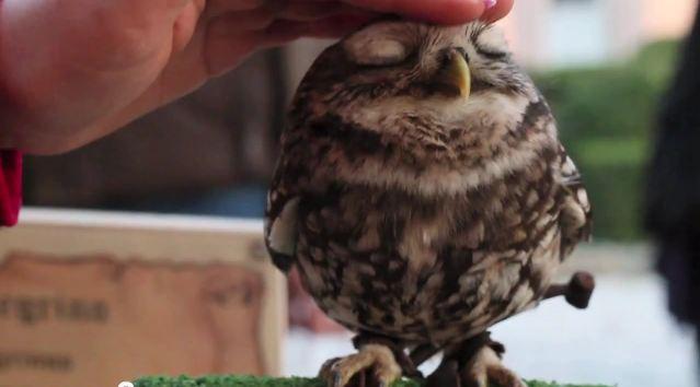 Lovely-Owl-7.jpg