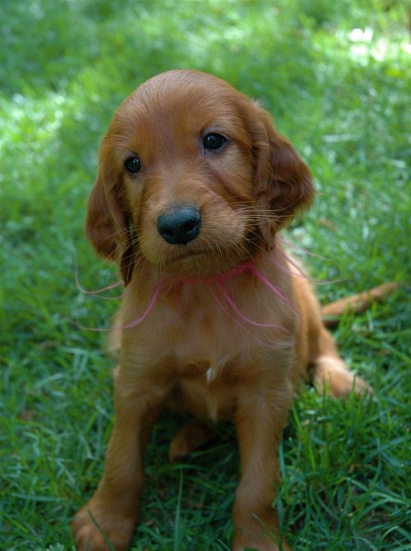 Pets/Makena's puppy