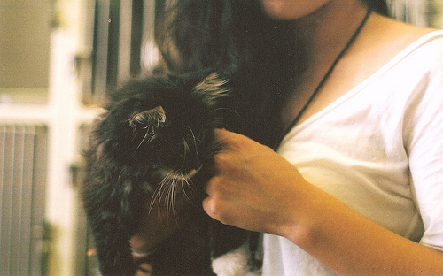 Adorable-black-cat-cute-fluffy-Favim.com-470985.jpg