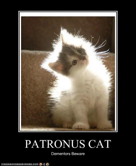 Cat's Badge