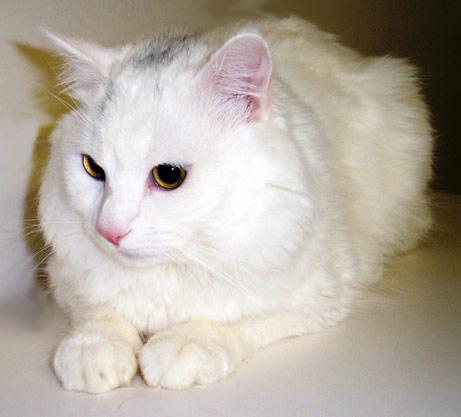 Pets/Leonor's Cat