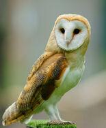 W-owl.jpg