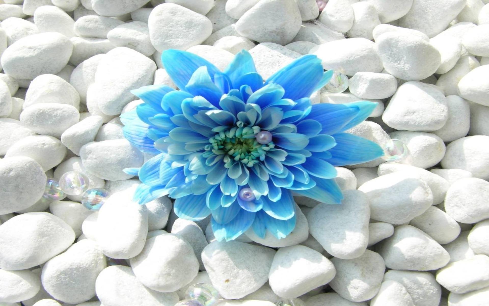 Bright blue flower.jpg