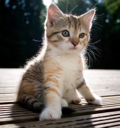 Anne-kitten.jpg