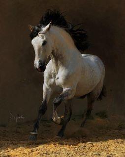Dakota's horse.jpg